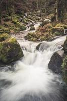 pequeno riacho na floresta negra, alemanha foto