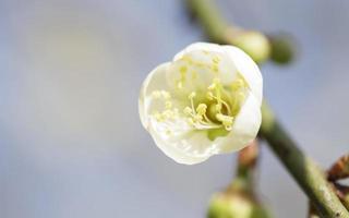 flor na árvore