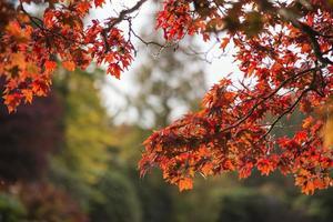 bela paisagem de outono vibrante paisagem florestal pela manhã foto