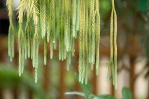 bela planta verde e textura. foto