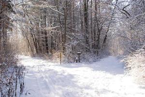 Cross County Skinning Trail