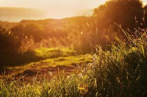 campo no efeito pôr do sol e bokeh