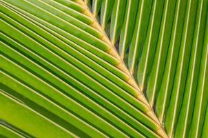 textura de folha de coco