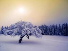 lindo pôr do sol de inverno nas montanhas foto