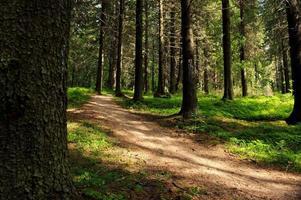 caminho na floresta em um dia ensolarado