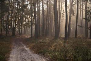 bela pista de outono na floresta. paisagem de outono.