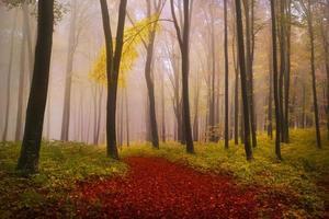 trilha sonhadora dentro da floresta com folhas vermelhas