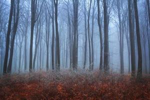 nevoeiro azul durante o final do outono na floresta foto