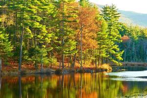 lagoa na floresta nacional de montanha branca, new hampshire