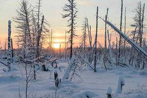 paisagem de inverno da taiga, península yamal