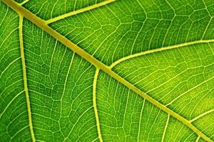 detalhe de fibras de uma folha