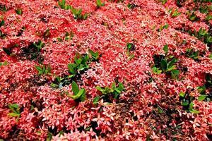flor vermelha no jardim. foto