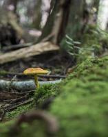 cogumelo na floresta