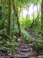 escadas ao longo de uma trilha na floresta