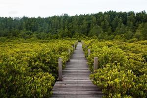 ponte entre manguezais, tailândia. foto