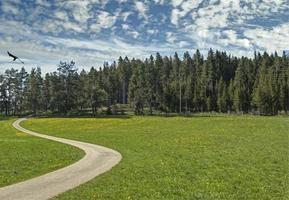 trilha de caminhada na floresta negra