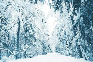 floresta de inverno russo na neve foto
