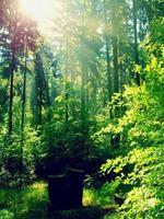 pôr do sol de primavera na floresta verde profunda