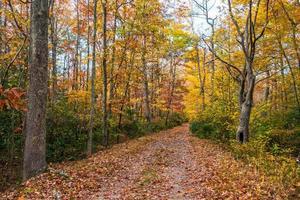 trilha de outono