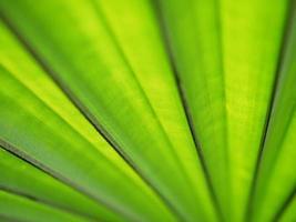 lindo fundo de folha de palmeira