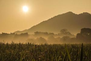 hora da manhã em Khao Yai foto