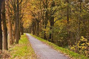 estrada no outono foto