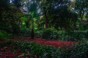 lindo jardim foto