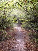 caminho na floresta iluminada pelo sol