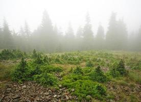 paisagem floresta montanhosa em dia chuvoso no nevoeiro