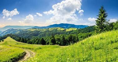 floresta de coníferas no topo de uma montanha ao nascer do sol foto