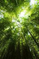 luz na floresta de bambu