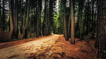 caminho cortado pela floresta
