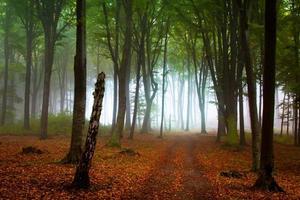 dias nublados na floresta