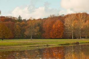 floresta de outono com reflexos de água.