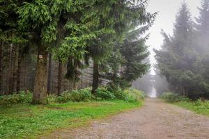 trilha de montanha enevoada na floresta