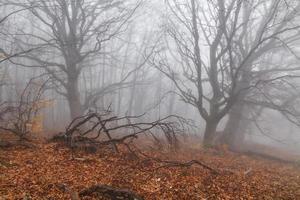 misteriosa floresta nevoenta de outono na encosta da montanha.