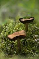 foco de dois cogumelos empilhados
