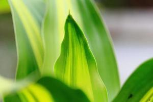 foto macro de folha verde e fresca