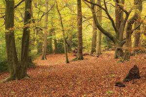 lindas cores vibrantes de outono outono em paisagem de floresta foto