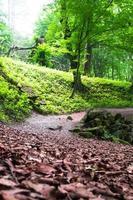 trilha por entre árvores altas em uma floresta exuberante