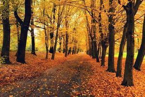 folhas de outono laranja