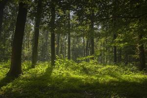 luz do sol através das árvores foto