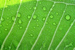 gotas de água na folha close up foto