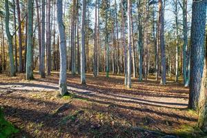 trilha de turismo colorida de outono na floresta