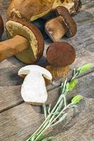 cogumelos edilus boletus frescos em uma mesa de madeira