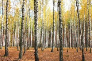 árvores de outono com folhas amareladas