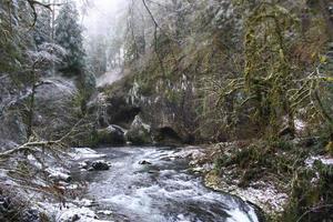 corredeiras de rio no meio de uma floresta nevada foto