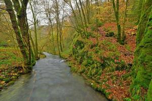 floresta de outono com riacho no meio do nevoeiro. Bélgica. Ardennes.