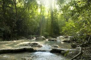 sol brilhando em um riacho murmurante na floresta