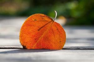 folha de outono. foco suave.